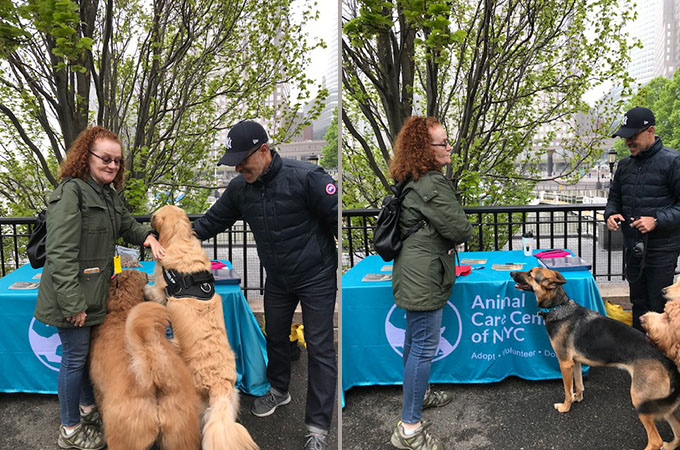 Battery Park City Dogs