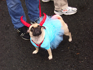 2004 BPC Halloween Dog Parade